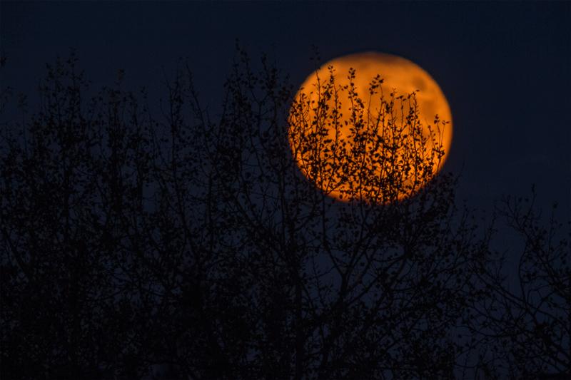 16 conseils pour photographier la lune
