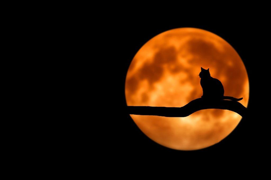Nos astuces pour de belles photos d'Halloween à faire pâlir d'envie