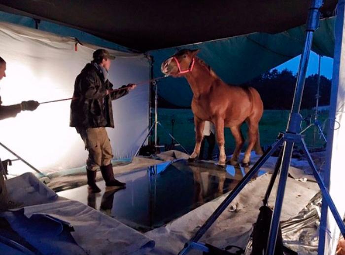 Fotos originales y creativas: Usando un espejo para fotografiar un caballo