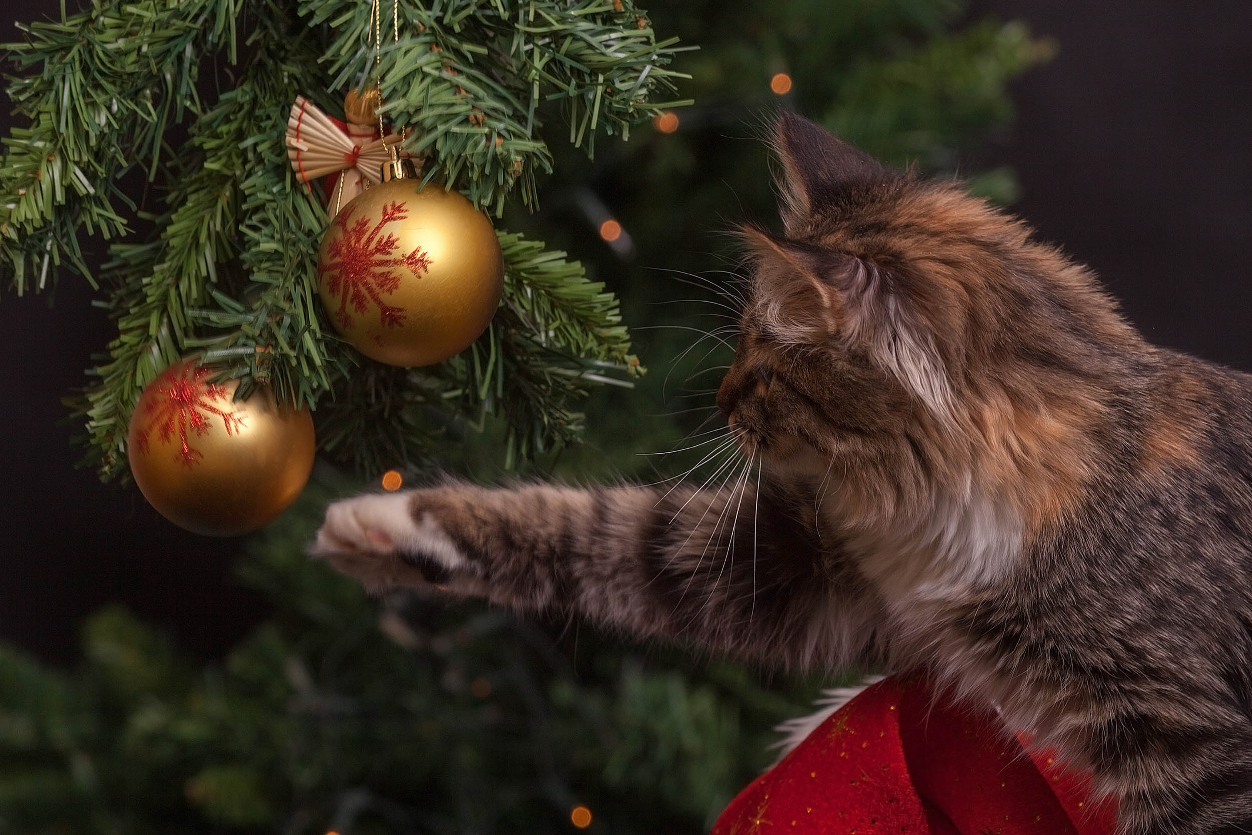 Photographier un sapin de Noël avec des animaux de compagnie