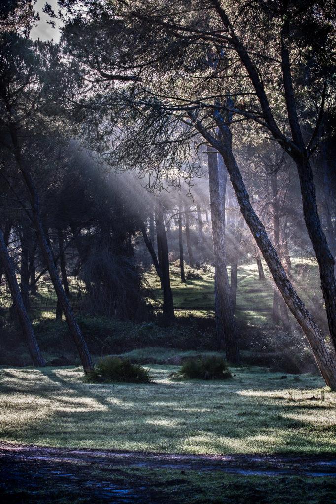Bosque con teleobjetivo