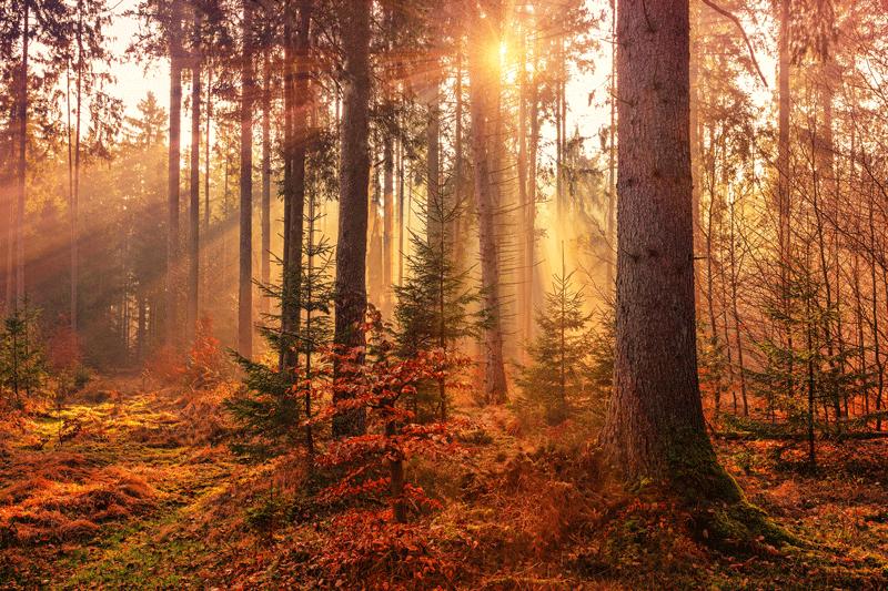 entender medición de luz en fotografía