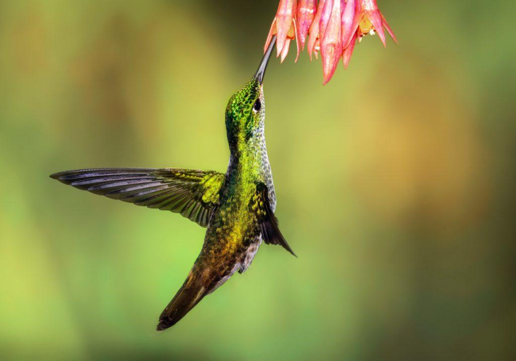 Fotografía de aves usando el enfoque manual