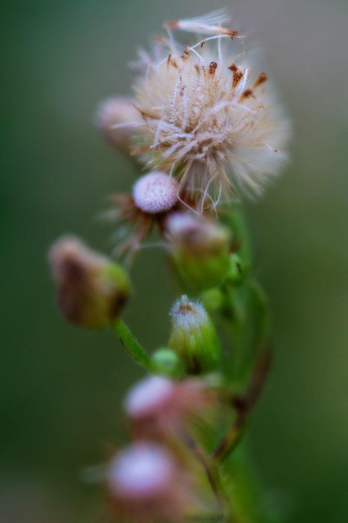 Photographie de nature avec l'Irix 150 mm