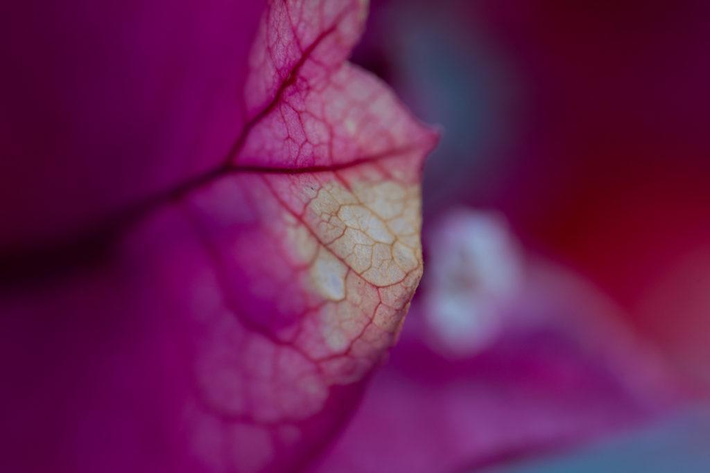 Irix 150 mm pour les photos de nature