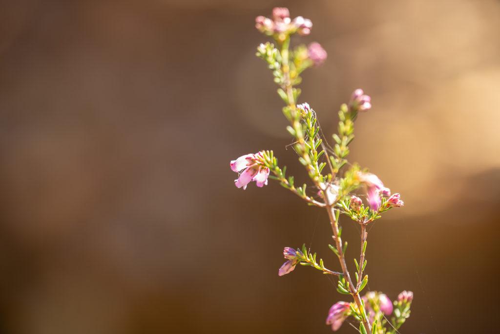Photo prise avec l'Irix 150 mm