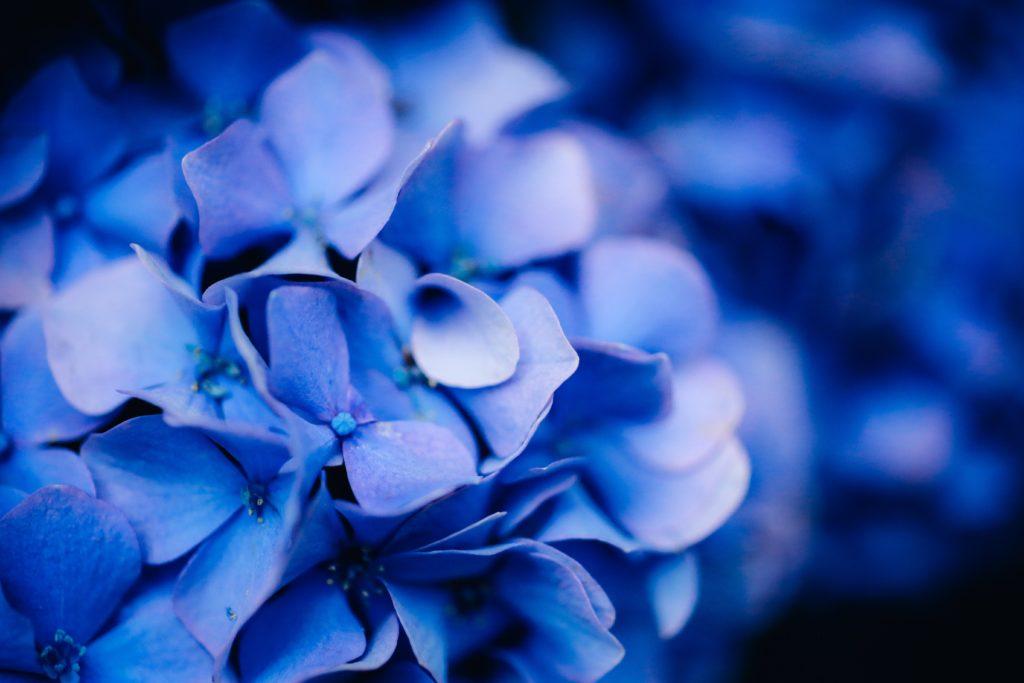 bagues d'inversion macro pour les photos de fleurs