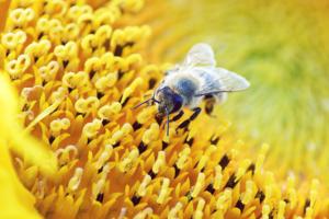 Cómo fotografiar insectos para conseguir macros impactantes