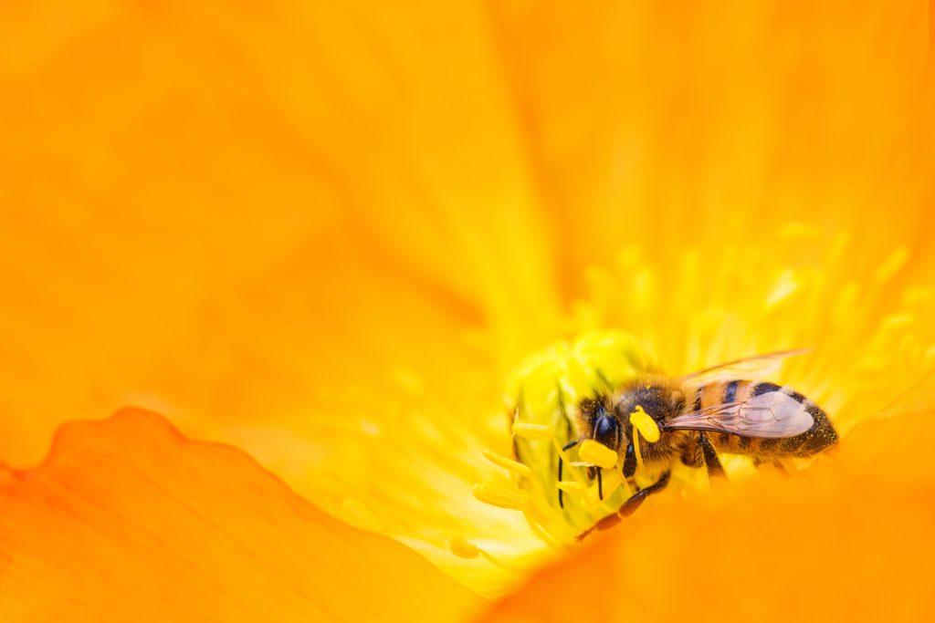 Photographier des insectes pour réussir des macros marquantes