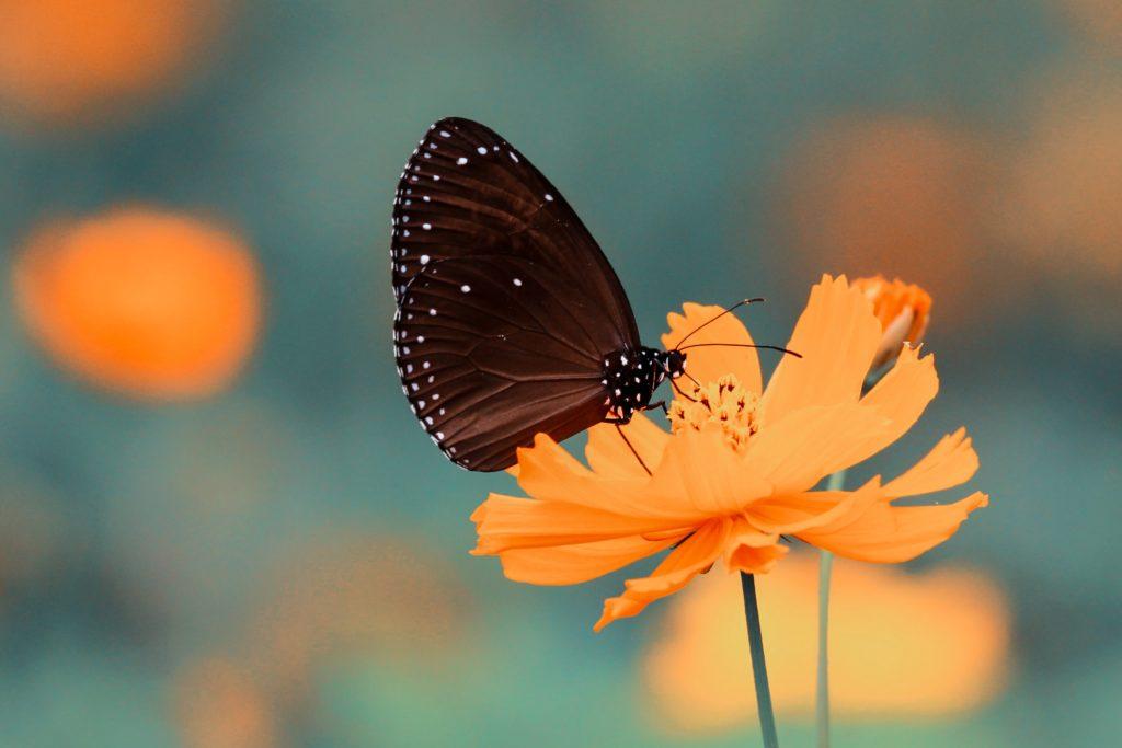 photographier des insectes
