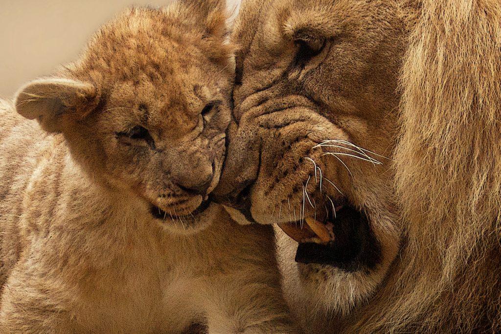 Fotografiar animales salvajes cómo conseguirlo