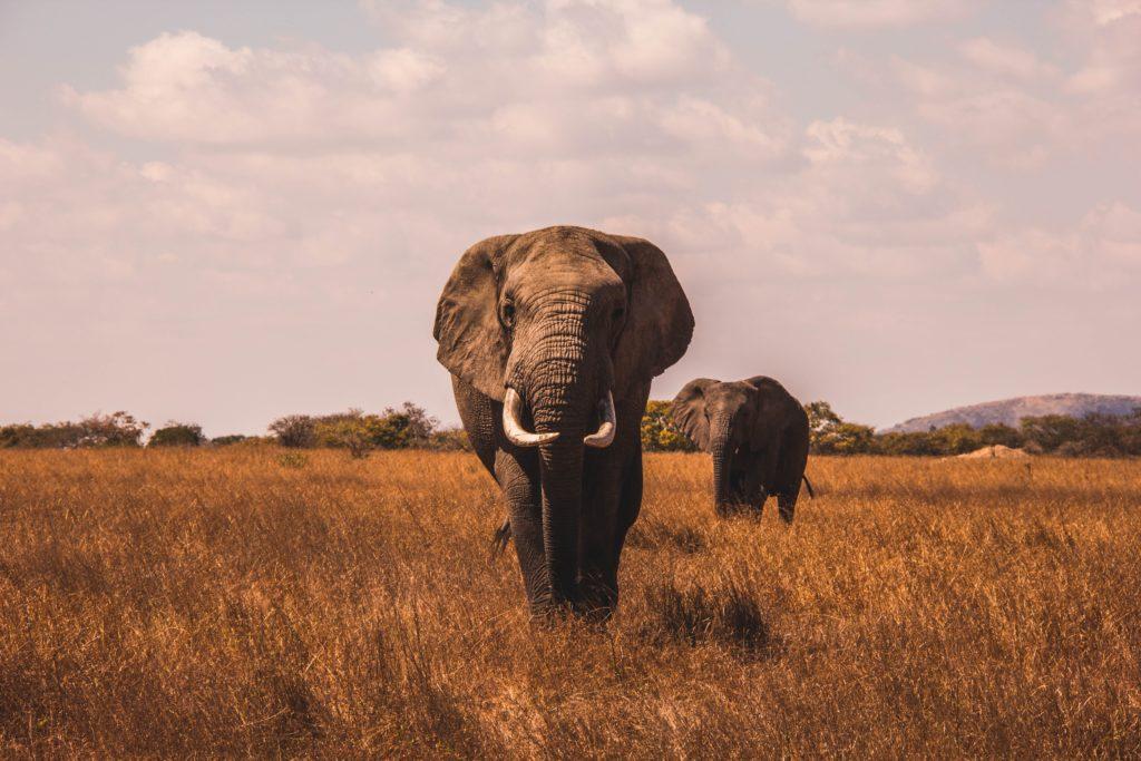 Photographier des animaux sauvages avec des téléobjectifs indispensables