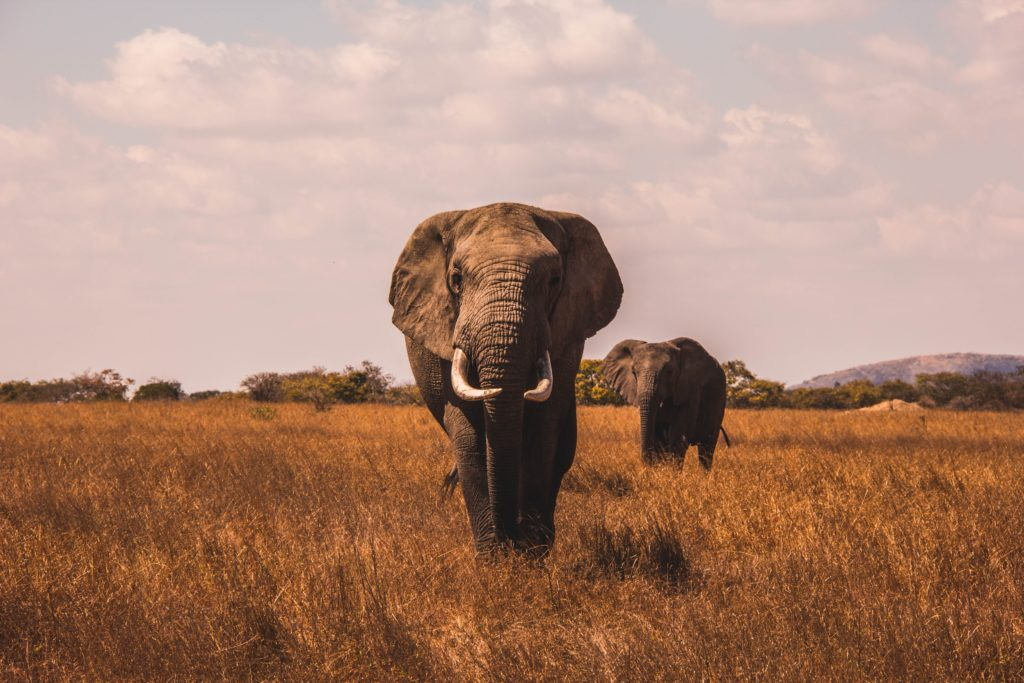 Fotografiar animales salvajes teleobjetivos imprescindibles