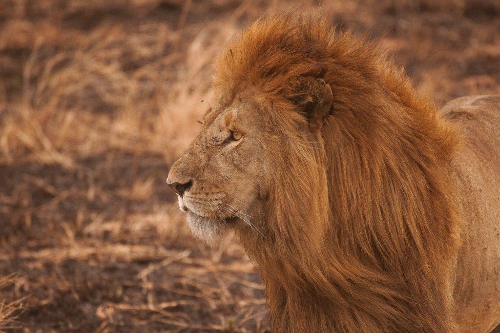 Teleobjetivos para fotografiar animales salvajes