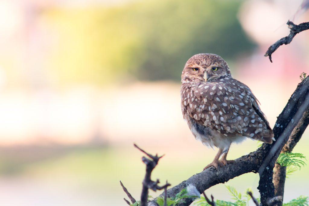 claves para Fotografiar animales salvajes