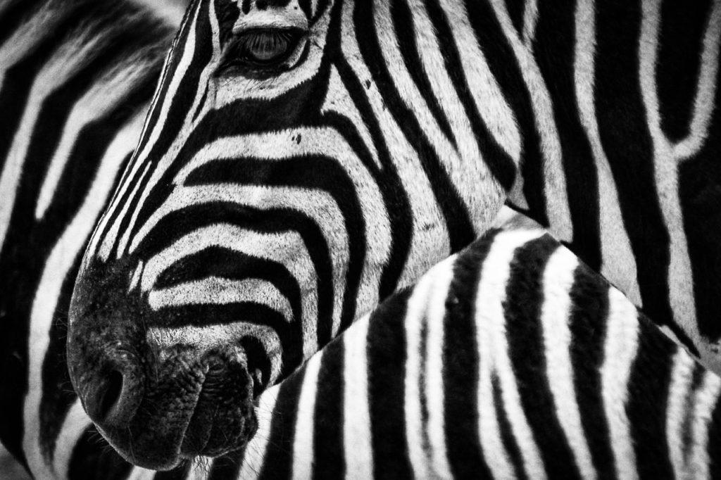 planificar y Fotografiar animales salvajes