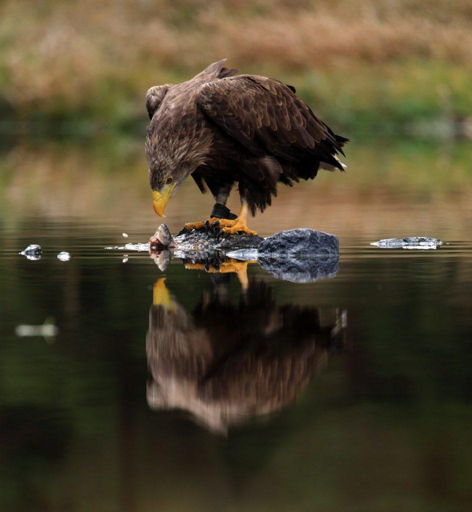 qué hacer para Fotografiar animales salvajes