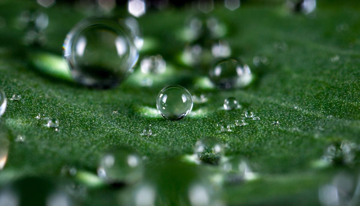 Gotas de lluvia en una hoja
