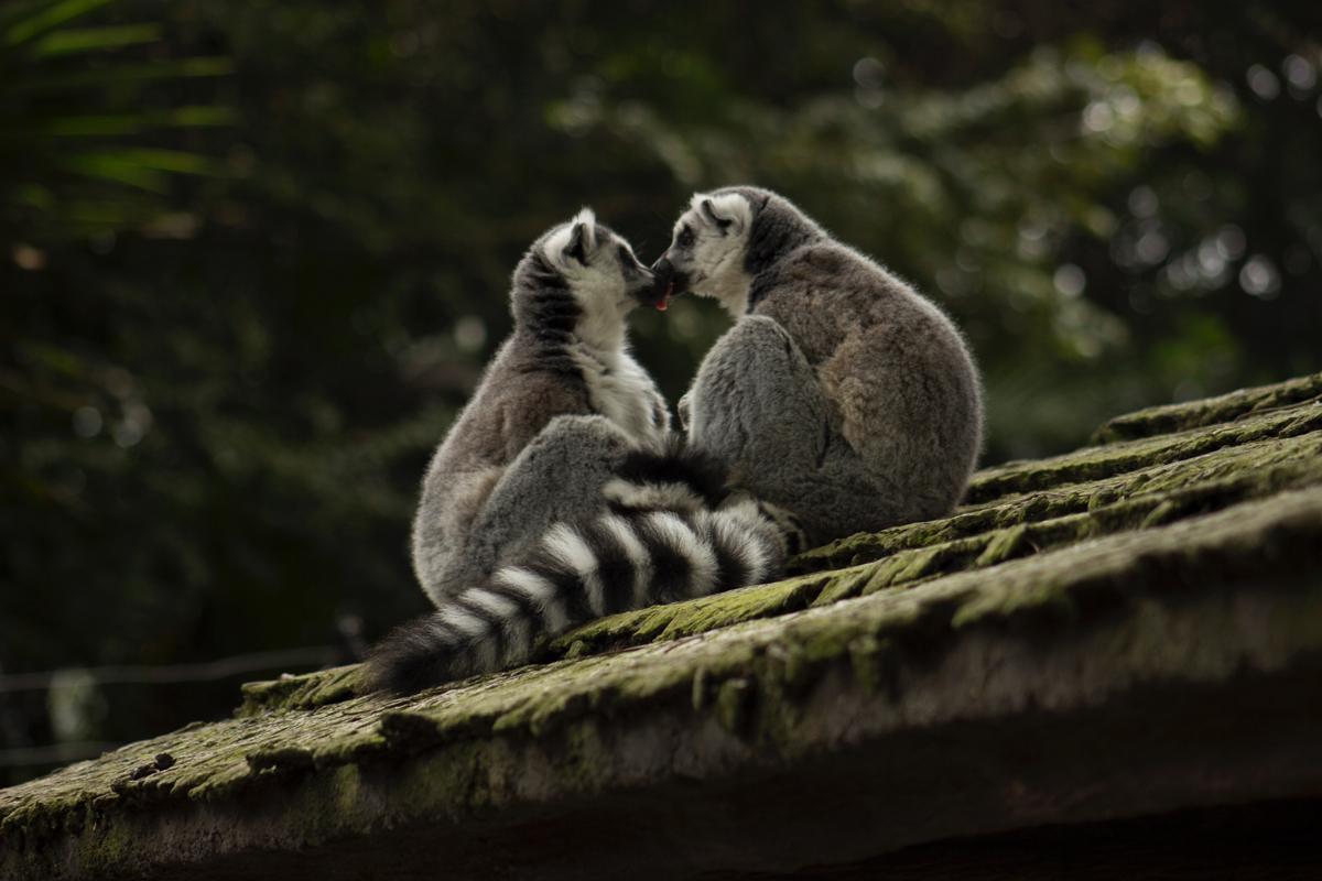 Un baiser entre animaux