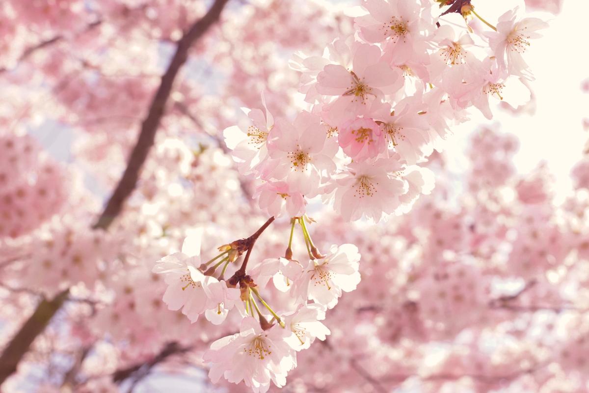 Fotografiar la primavera llenará de color tus imágenes