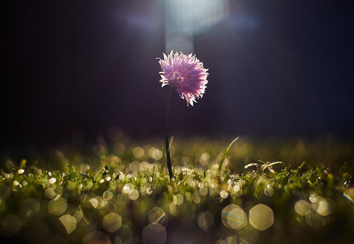 Créez de belles auréoles sur les fleurs