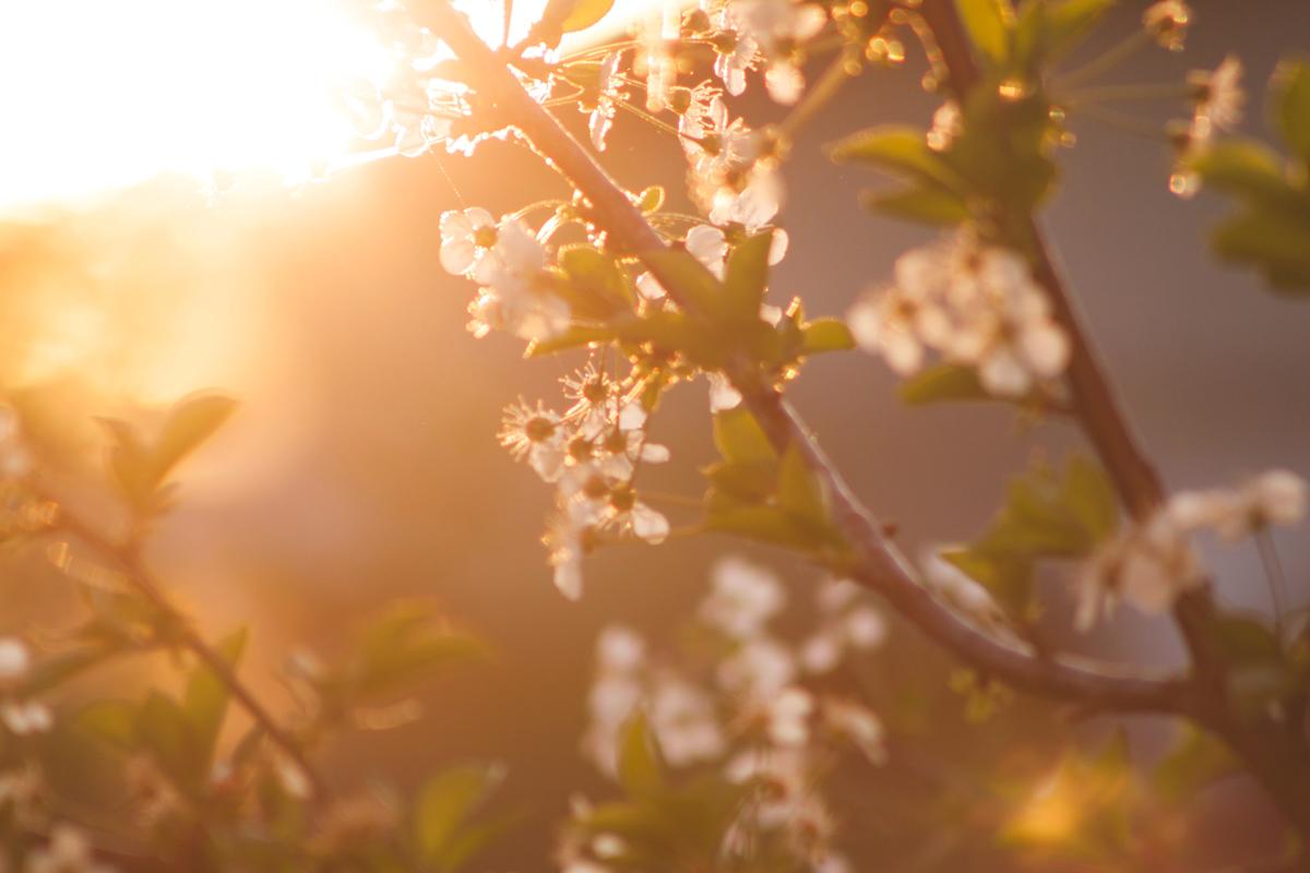 Añade flares al fotografiar la primavera