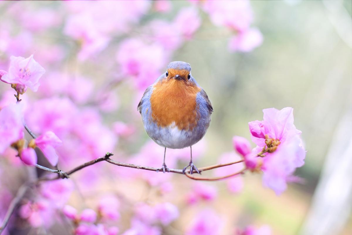Busca instantáneas únicas al fotografiar la primavera