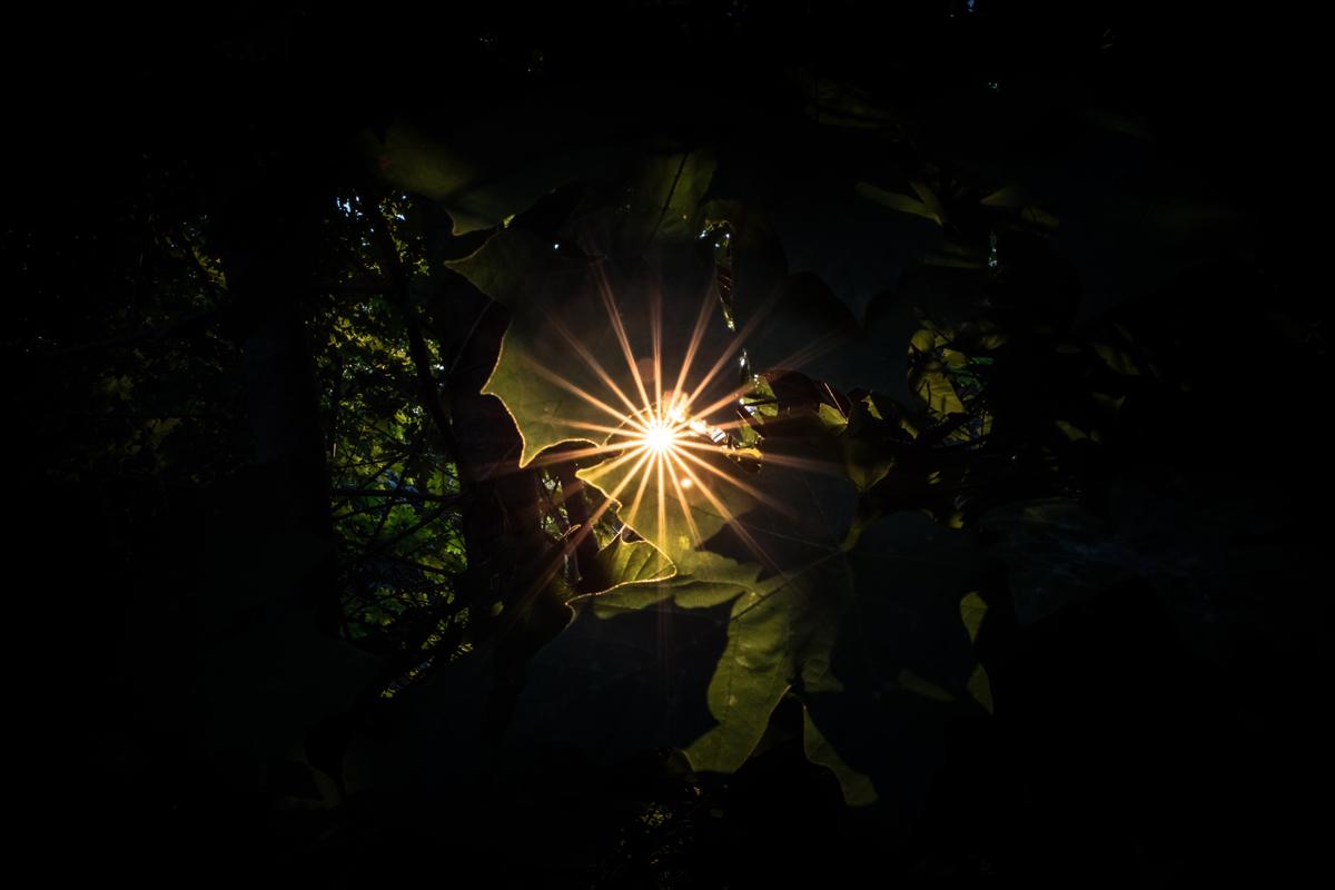 Proyectos fotográficos divertidos: luces con estrellas