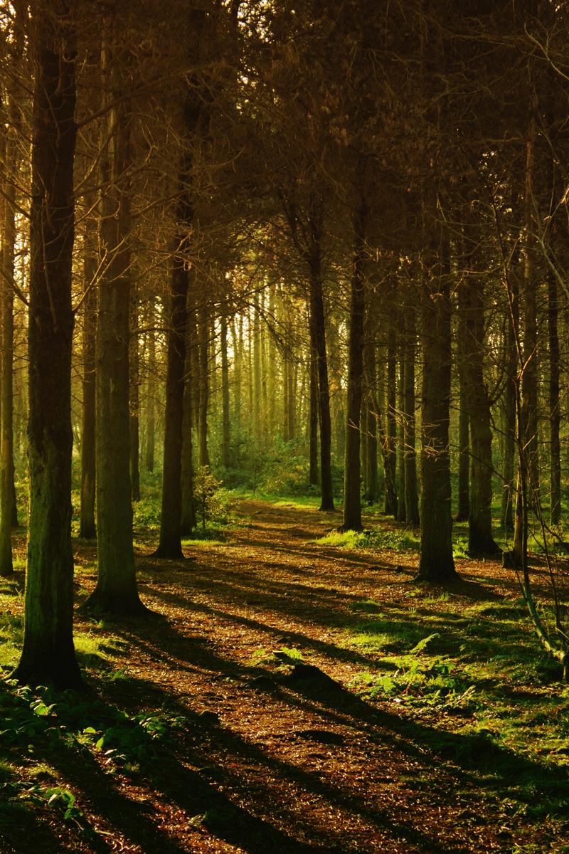 Aprovecha la luz natural