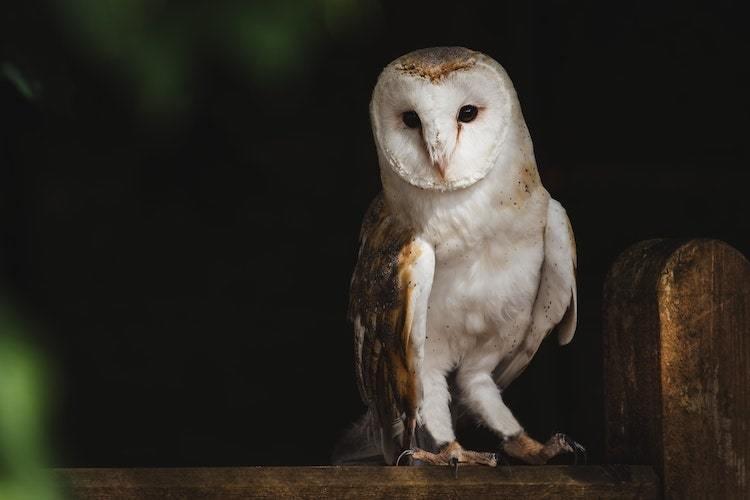 Utilisez la lampe frontale pour la photographie de nature la nuit