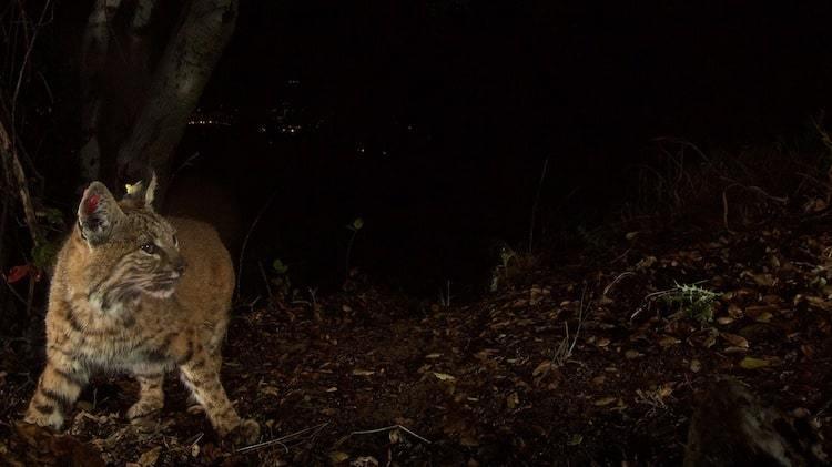 Usa un disparador remoto al fotografiar en la naturaleza
