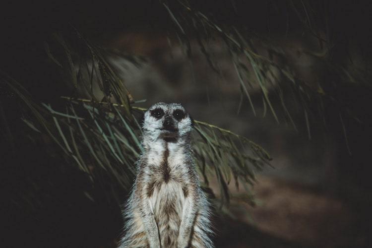 Étudiez les animaux pour la photographie de nature la nuit