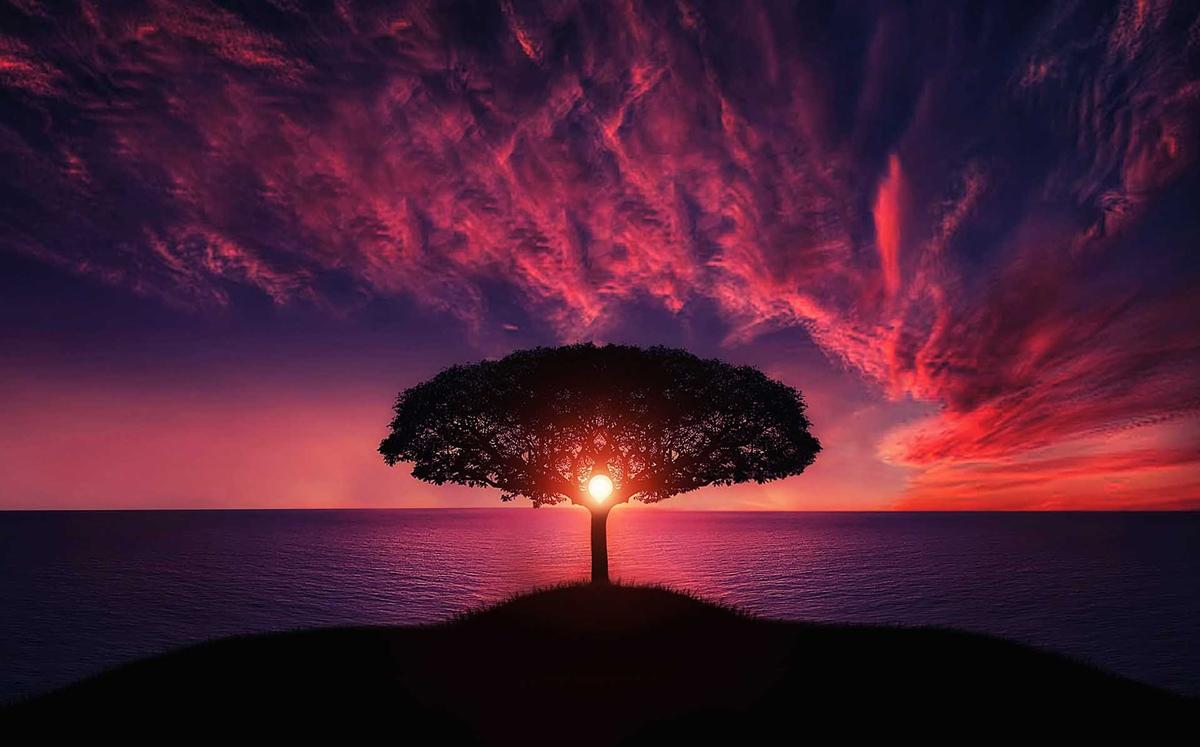 Fotos de amaneceres y atardeceres: Detrás de un árbol