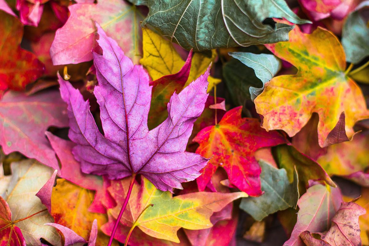 Peignez des feuilles d'arbre