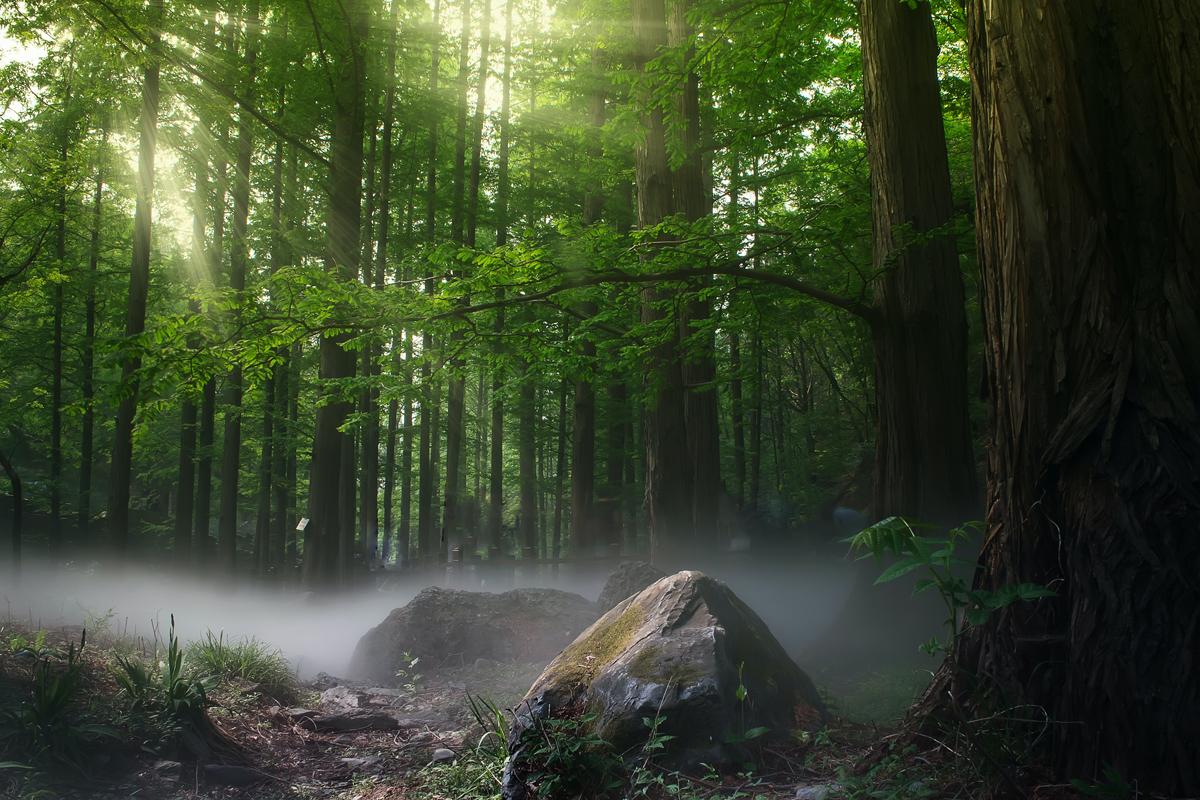Nieblina en un bosque