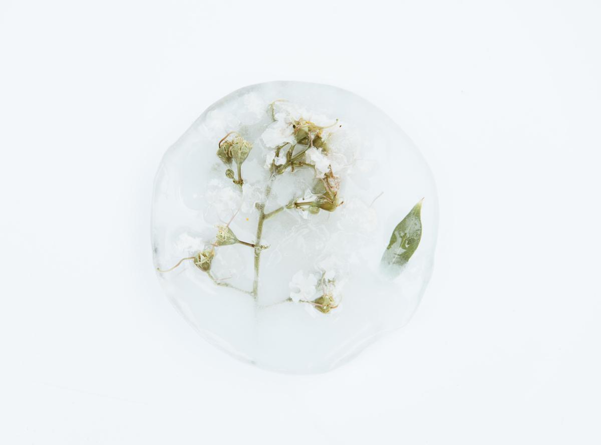 Comment photographier des fleurs congelées ? Faites-le petit à petit
