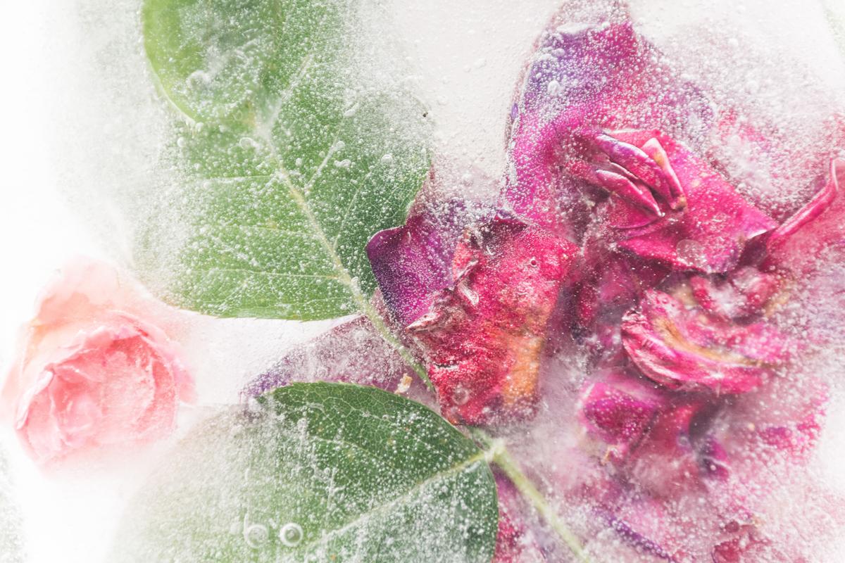 Cómo fotografiar flores congeladas