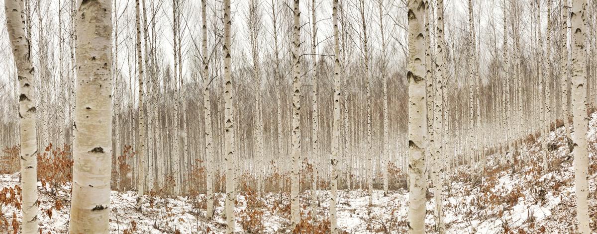 Fotos panorámicas originales: Interior de un bosque